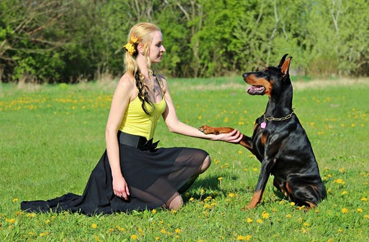 holistic dog supplements